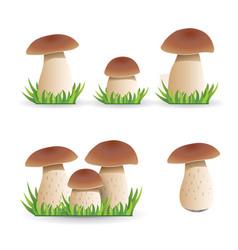 set white mushroom vegetable health vector image