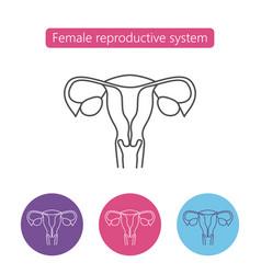 Uterus organ line icon vector
