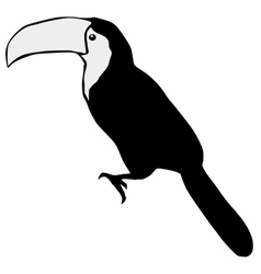 silhouette of toucan vector image vector image