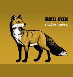 hand drawing of fox vector image