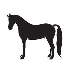 horse isolated on white background animal vector image