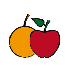 apple and orange fruit nutrition diet vitamins vector image