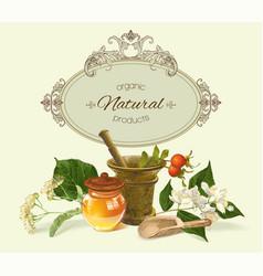herbal banner vector image