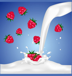 Red raspberry fruits falling into the milk splash vector