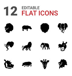 Safari icons vector