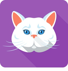White british Cat icon flat design vector image