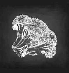 Chalk sketch broccoli vector