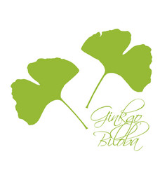 ginkgo biloba leaves green silhouette white vector image