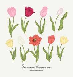 hand drawn colorful tulips spring flowers set vector image