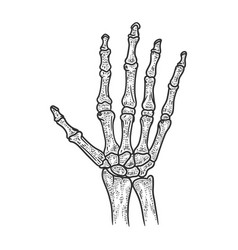 Human hand skeleton sketch vector