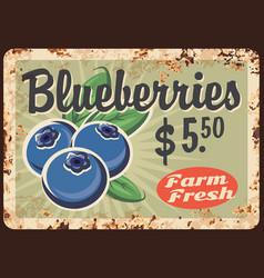Blueberries rusty metal plate vintage card vector