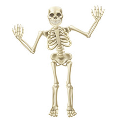 cartoon waving skeleton character vector image