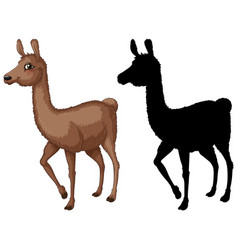 Set lama cartoon character vector