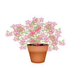 A Lovely Pink Flowering Plants in Flower Pot vector image