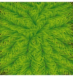 Background of fir vector image