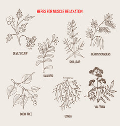 Best herbs for muscle relaxation vector