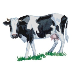 cow watercolor vector image