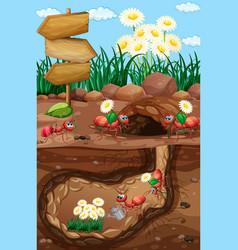Scene with ants and flowers in garden vector