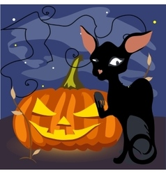 Black cat with a grinning pumpkin vector image vector image
