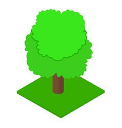 Ash tree icon isometric style vector