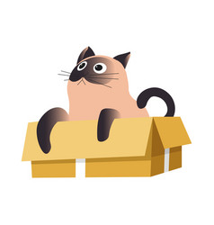Cat in box siamese breed relaxing or playing vector