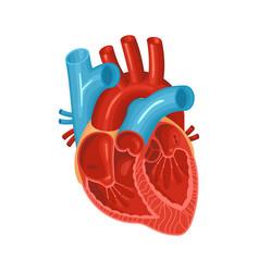 Flat heart vector