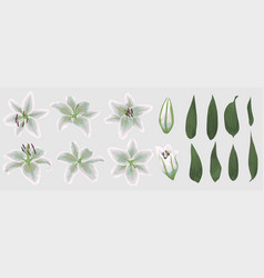 floral bouquet design set tender white lily vector image