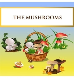 Forest mushrooms and basket with mushrooms vector