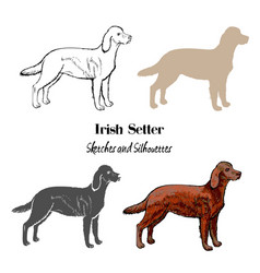 Irish setter dogs sketches vector