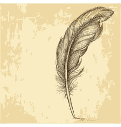 Sketch feather on grungy texture vector