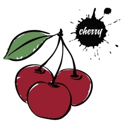 berries red cherry vector image