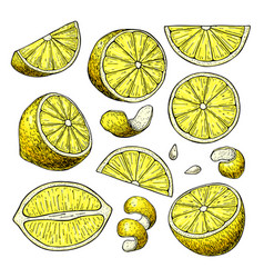 lemon drawing summer fruit artistic vector image vector image