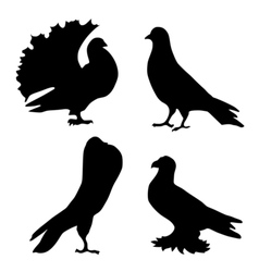 silhouette of pigeons vector image vector image