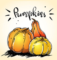 hand drawn pumpkins image with a lettering vector image