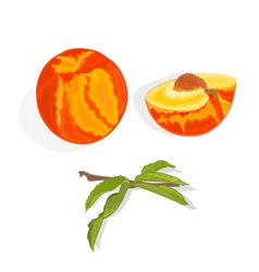 Peach with leaf slice and half with bone vector