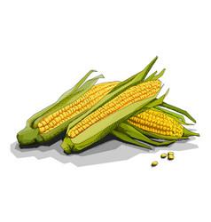 Simple corn cobs vector