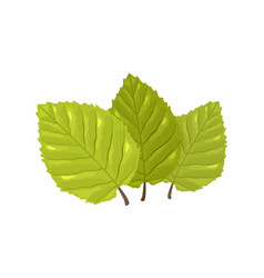 Three green leaves with visible tertiary veins of vector