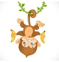 Cute baby monkey with banana hanging on the liana vector image vector image
