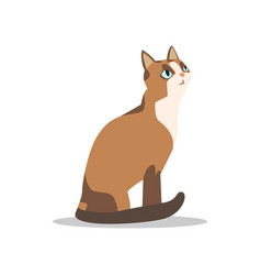 cartoon brown cat character with blue eyes light vector image