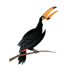 Cute cartoon toucan funny cartoon tropical bird vector