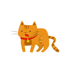 funny angry cat cute domestic pet animal cartoon vector image
