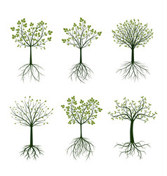 Green trees and roots vector
