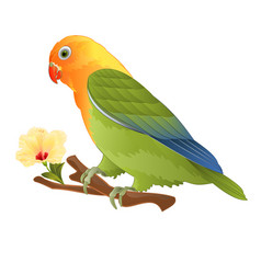parrot tropical bird lovebird agapornis vector image