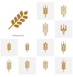 set of wheat luxury grain and bread labels nature vector image