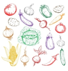 Sketched wholesome fresh vegetables icons vector image vector image