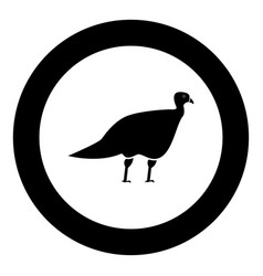 turkeycock black icon in circle vector image