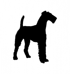 Airedale terrier vector image