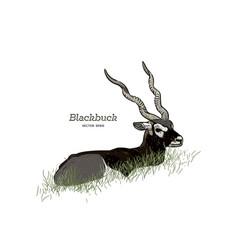 blackbuck antelope strepsiceros cervicapra vector image