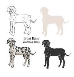 great dane dogs sketches vector image