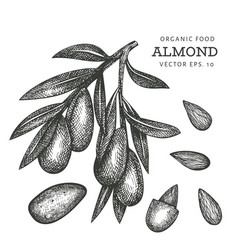 Hand drawn sketch almond branch organic food vector